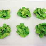 JAAP KRONEMAN, Krop sla [Head of lettuce], 2006