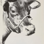 ANDY WARHOL, Cow, 1976 [wallpaper; black and white]