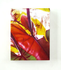 PIPILOTTI RIST, Pepperminta, 2005 [box with printed matter]